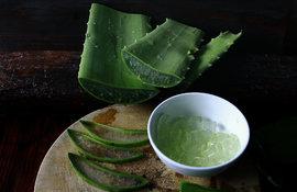 5 Verwendungsmöglichkeiten für Aloe Vera