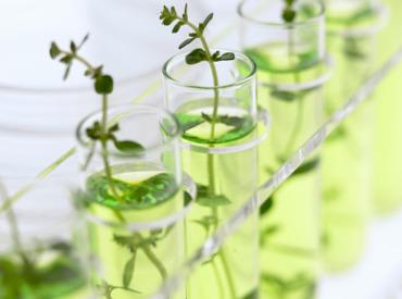 Inhaltsstoffe gegen vorzeitige Hautalterung