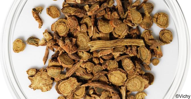 Baïcaline : la puissance d'une racine antioxydante